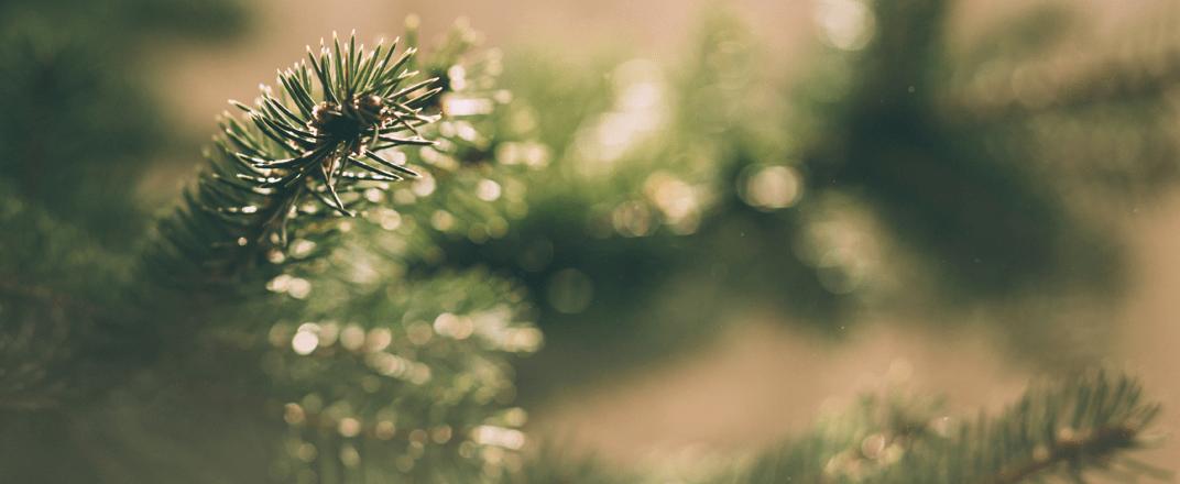 k_nstliche_weihnachtsb_ume.png